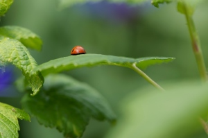 This is a ladybug butt. Cute, right?